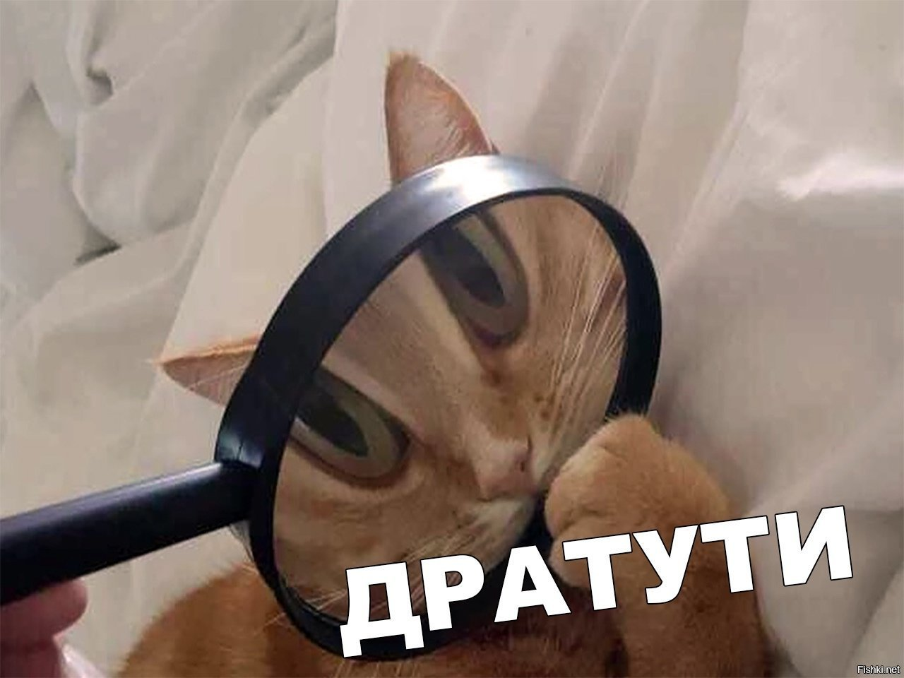 Дратути картинка кот в пальто