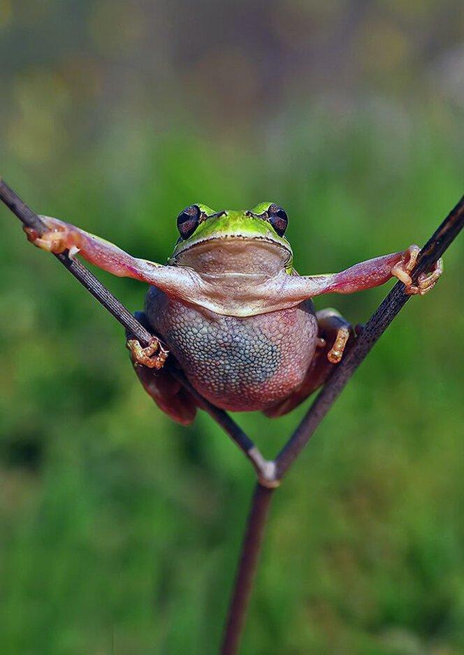 Открытки, картинки смешные лягушка