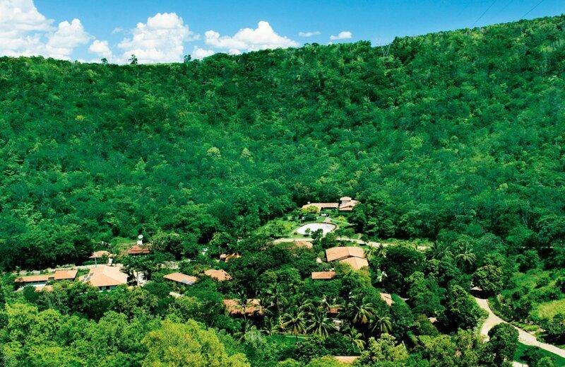 Бразильская пара, восстановившая за 20 лет целый лес Сальгадо, бразилия, восстановление, истории, лес, природа, пустошь, фотограф