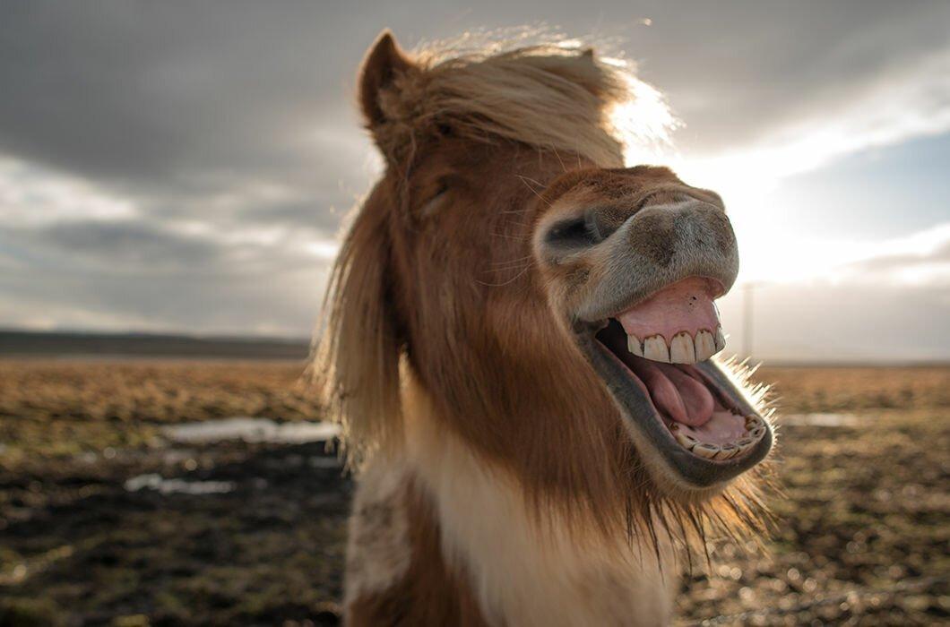 ржущие лошади картинки осенью она приобрела