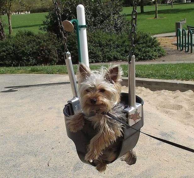 Что нужно для собак картинки ладно