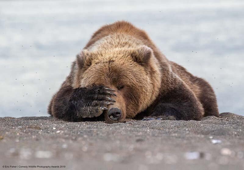 «Медвежья потребность» в мире, животные, забавно, подборка, смешно, юмор