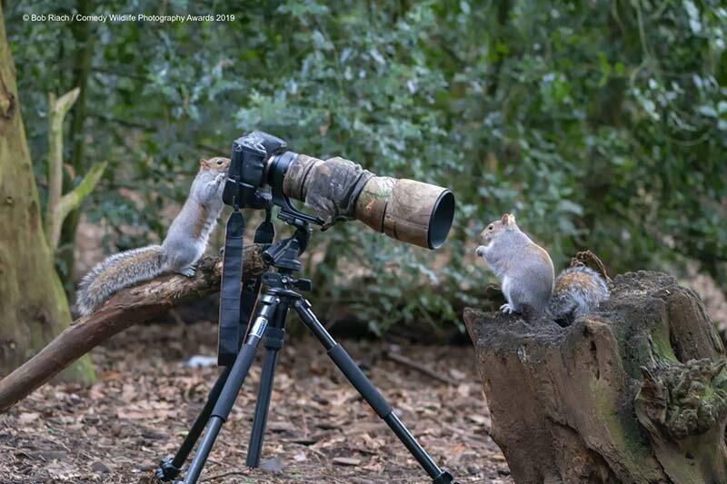 «Фотограф на работе» в мире, животные, забавно, подборка, смешно, юмор