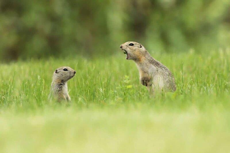 """Претенденты на звание """"Самая смешная фотография с животными-2019"""" в мире, животные, забавно, подборка, смешно, юмор"""