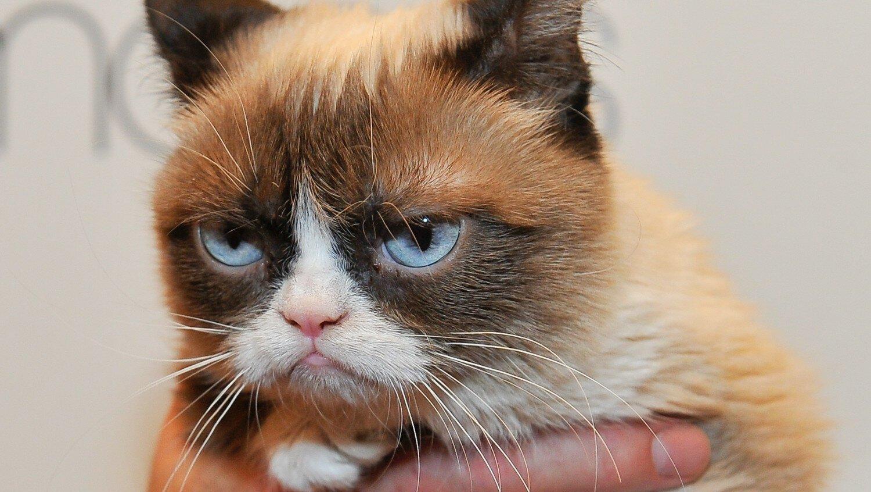 некоторых кот унылый фото правильного