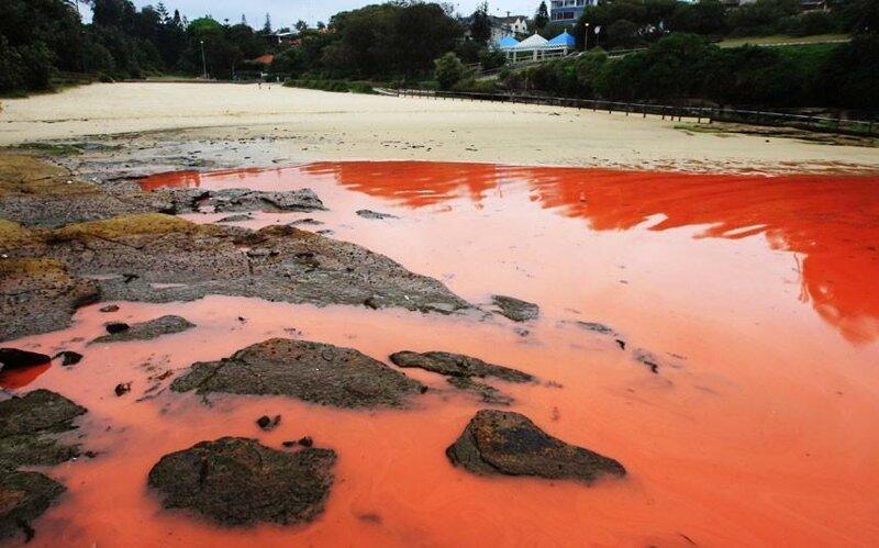 Красная вода у пляжей Австралии