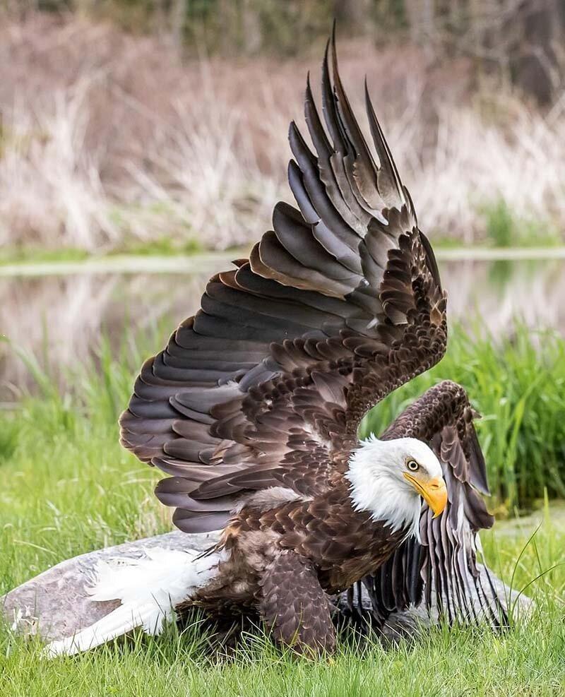 Картинки с птицей орлом