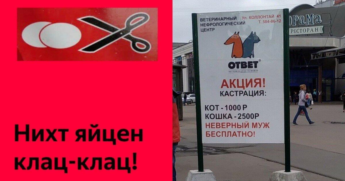 Заманчивая акция: петербургская ветклиника предложила бесплатно кастрировать мужей