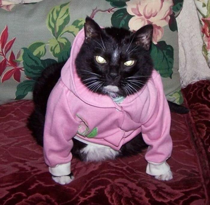 Дома картинки, прикольные картинки с кошками в одежде