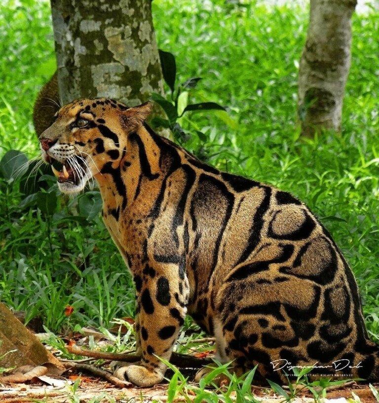 дикие кошки фото и названия в природе райдерам удобнее носить