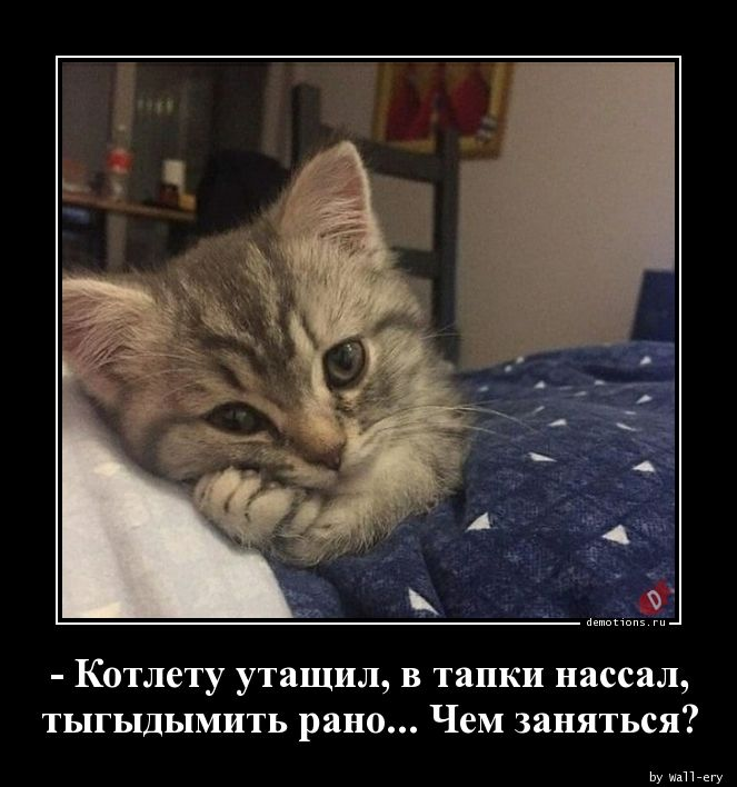 59291559496776-kotletu-utaschil-v-demoti