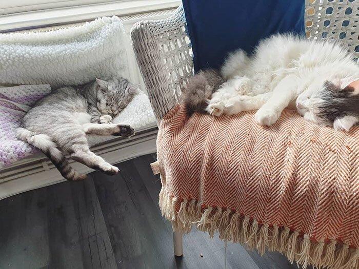 Котик с обвисшей кожей впервые узнал, что такое любовь человека