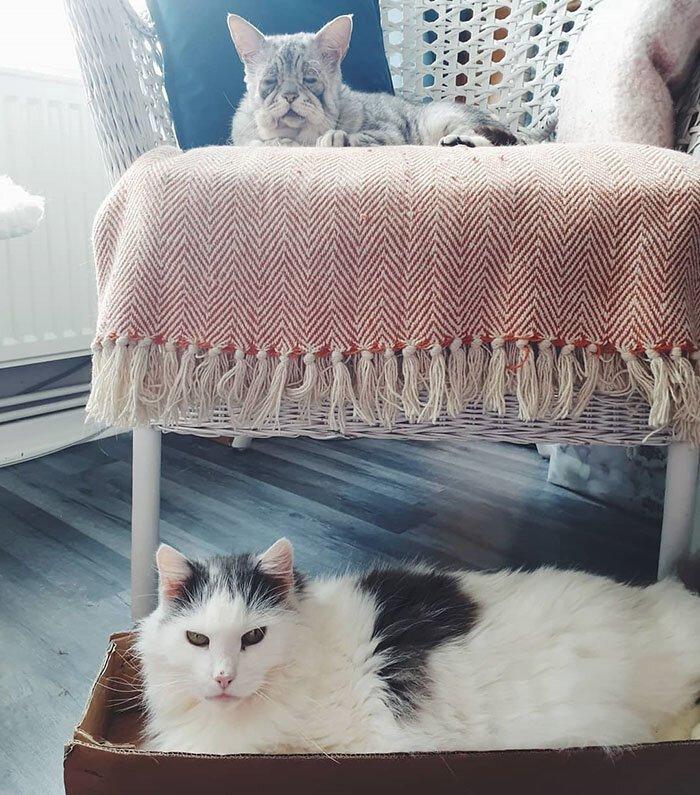 Порода кошек которая обвисает thumbnail