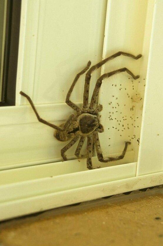 Маленький друг, поселившийся на вашей двери