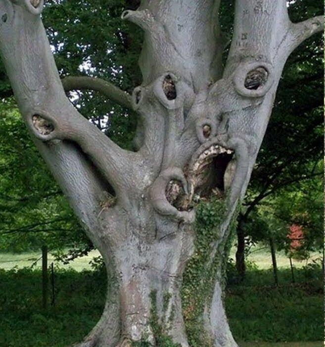 Картинки деревьев смешные, рамки