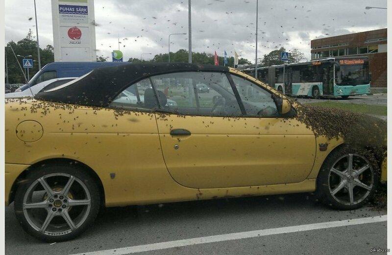 А вот и пчелы, облюбовавшие машину