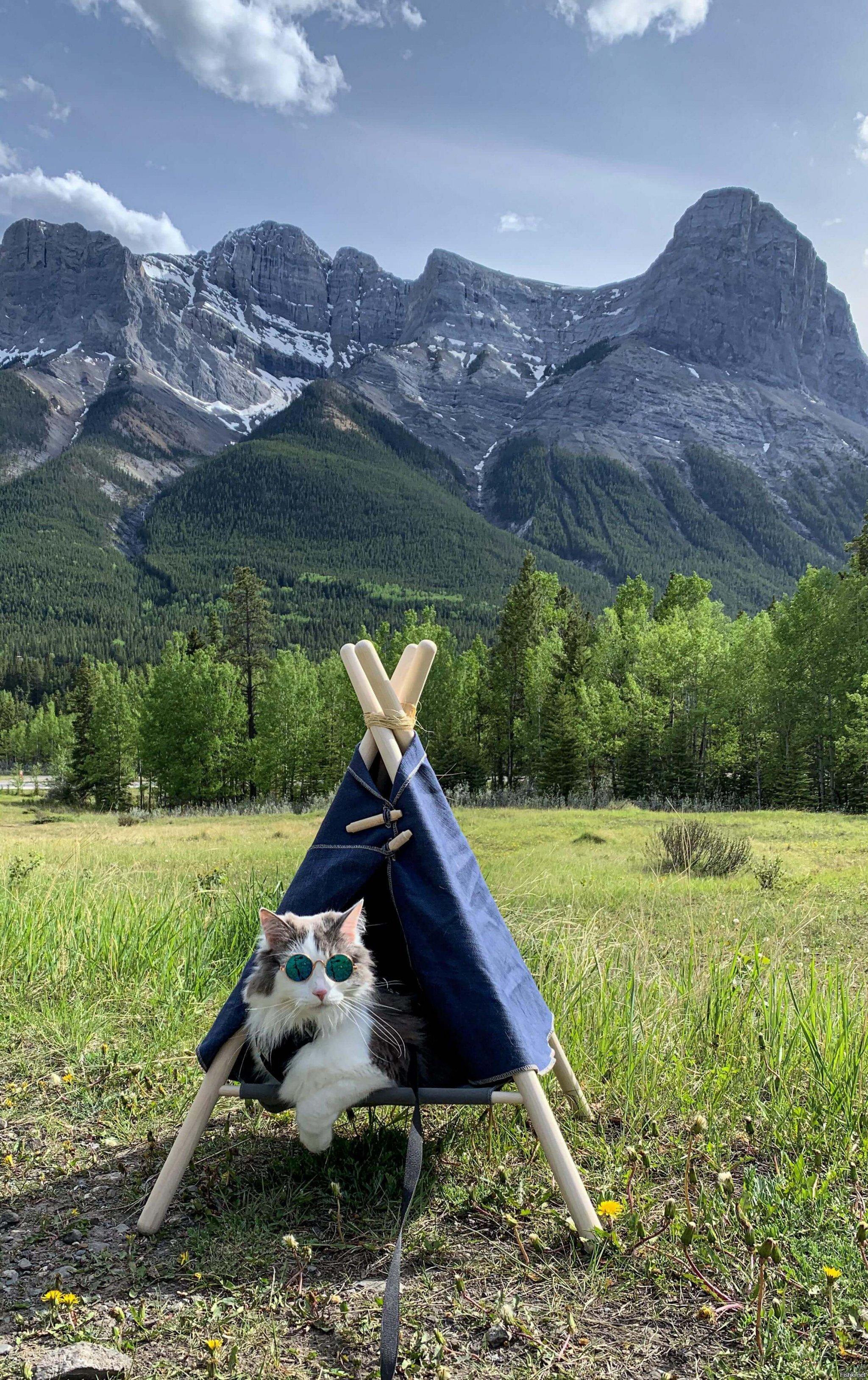 пороге картинки с котами в горах этом они заявили