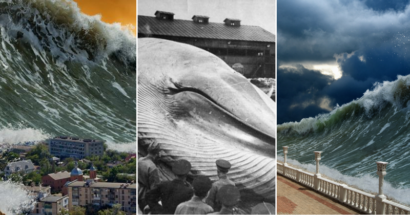Несколько разрушительных фактов о цунами