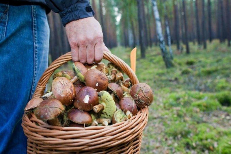 Минсельхоз оценивает запасы дикорастущего сырья примерно в 8,5 млн тонн в год ynews, Минсельхоз, грибы, лес, налоги, орехи, ягоды