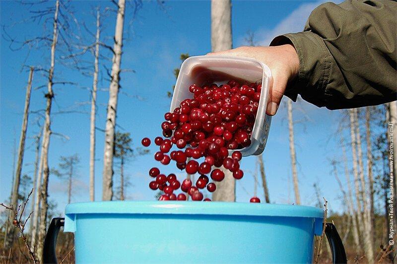 В России могут ввести налог на сбор грибов, ягод и лекарственных трав ynews, Минсельхоз, грибы, лес, налоги, орехи, ягоды