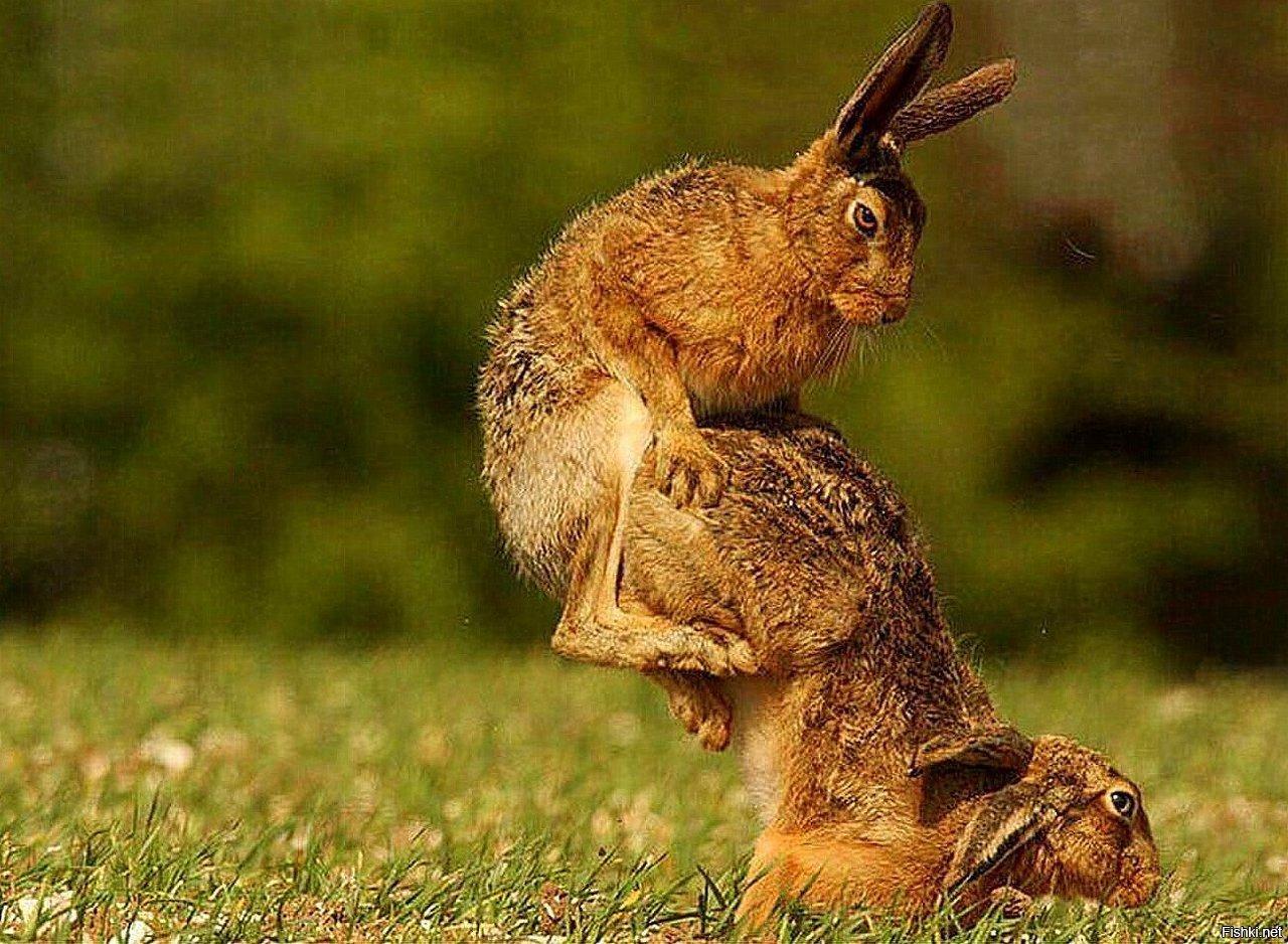 Открытки именем, приколы в картинках с зайцами
