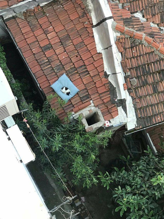 Коты и крыша — это как кофе и сливки