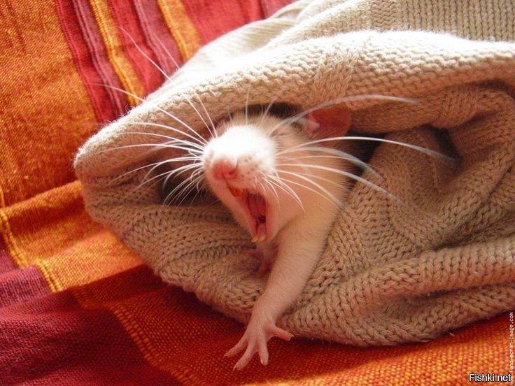 Спокойной ночи мышки веселые картинки