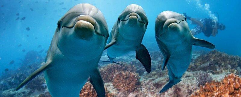 21. Среднестатистический дельфин за сутки поглощает количество рыбы, равное примерно четверти его веса.