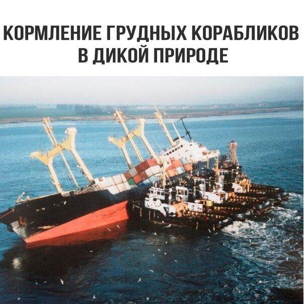 https://cdn.fishki.net/upload/post/2019/08/19/3062187/17-1.jpg