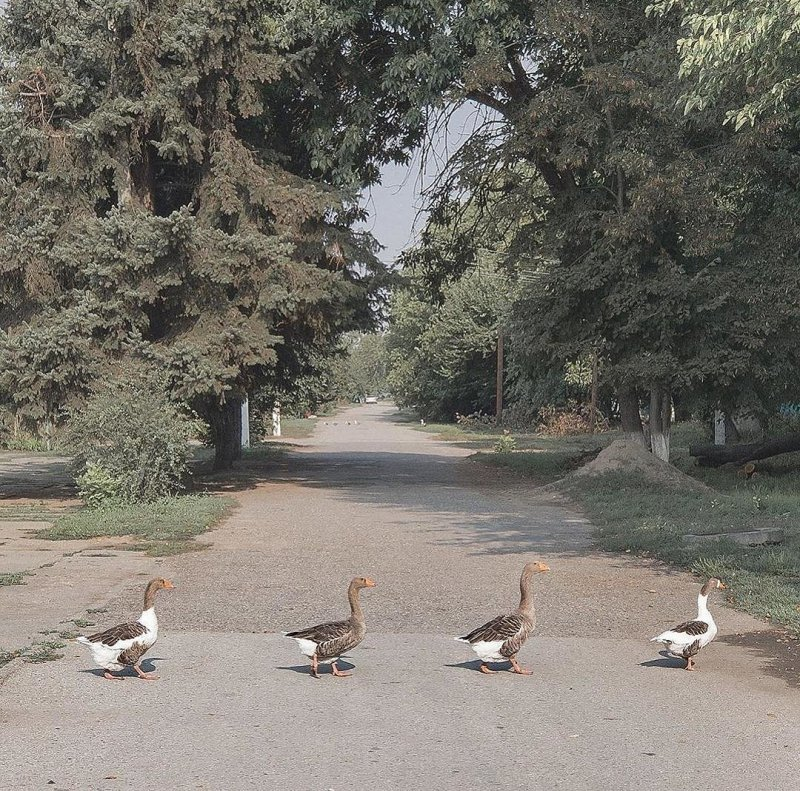 В стиле Abbey Road