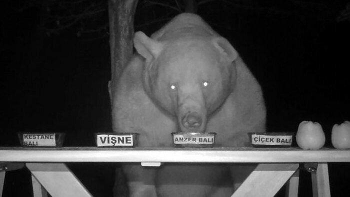Пасечник из Трабзона проверил качество мёда на медведях