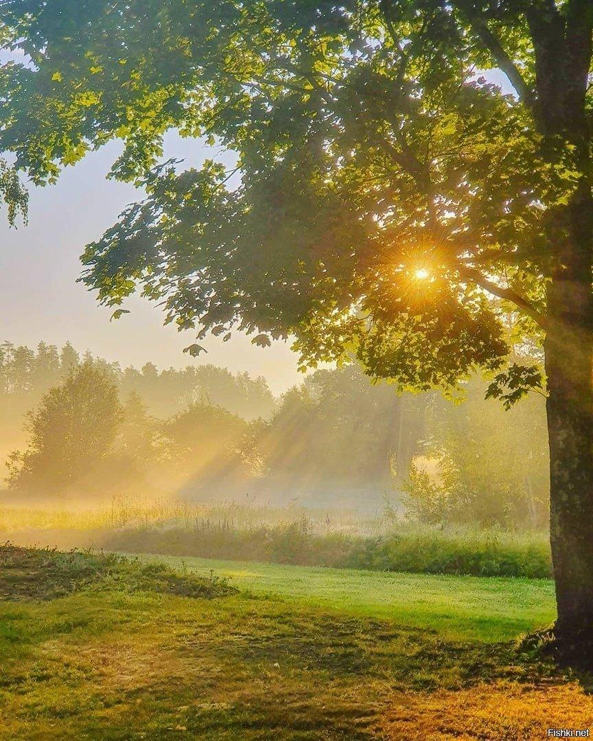Доброе солнечное утро фото