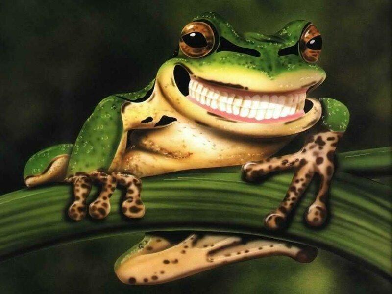 картинка крутая лягушка работы стоматологическим