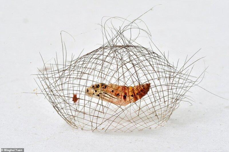 """10. """"Коконовая клетка"""", фотограф Minghui Yuan"""