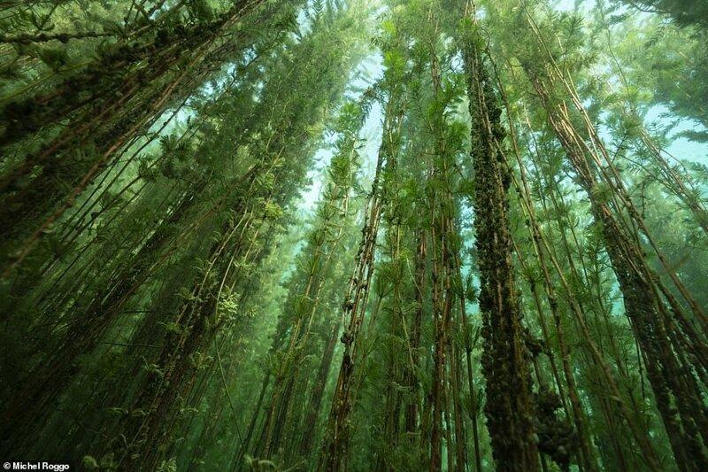 """7. """"Водяной лес"""", Michel Roggo, Швейцария"""