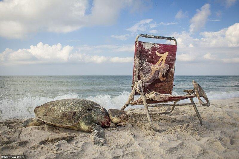 """6. """"Пляжный мусор"""", Matthew Ware, Алабама, США"""