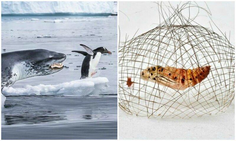 14 впечатляющих кадров дикой природы с конкурса Wildlife Photographer of the Year