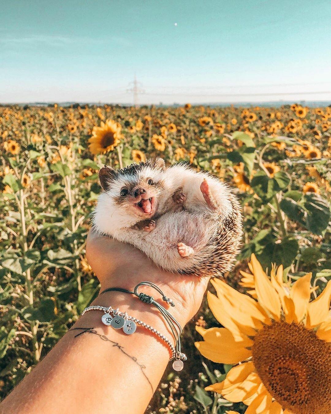 Ежик и его счастье картинки