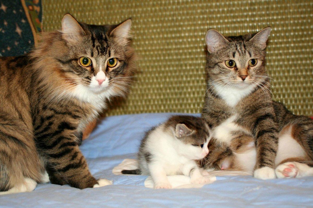картинки с семьями котов процессе