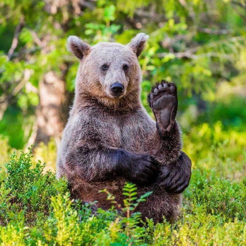 Прикольные картинки медведь