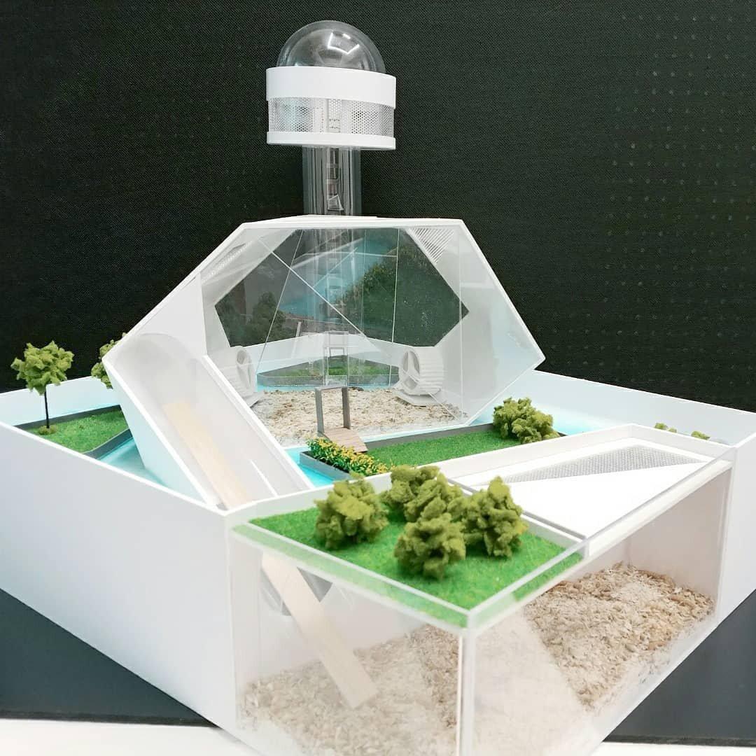 Южнокорейские дизайнеры строят минидворцы для хомяков