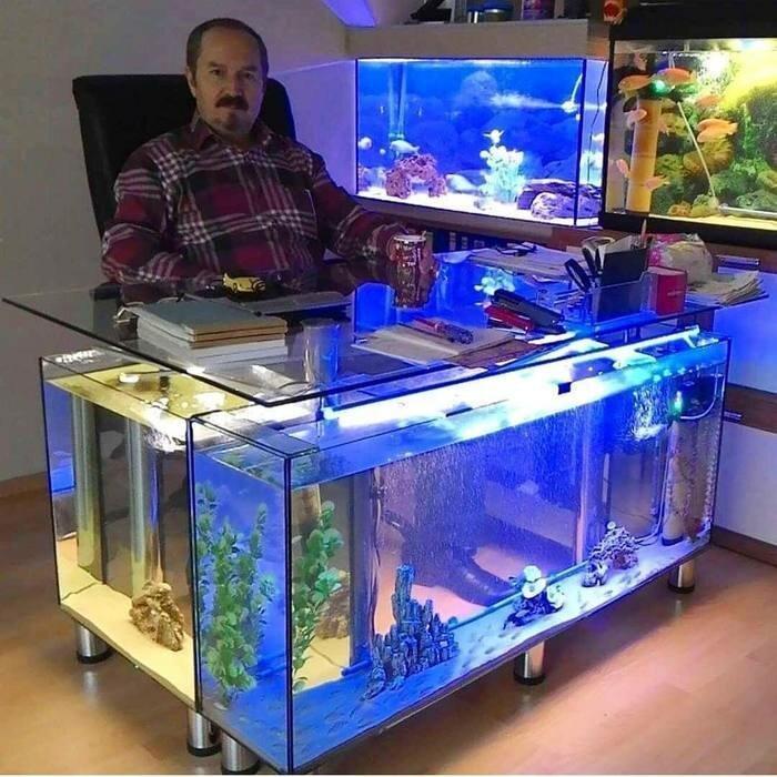 Когда ты директор магазина по продаже аквариумов