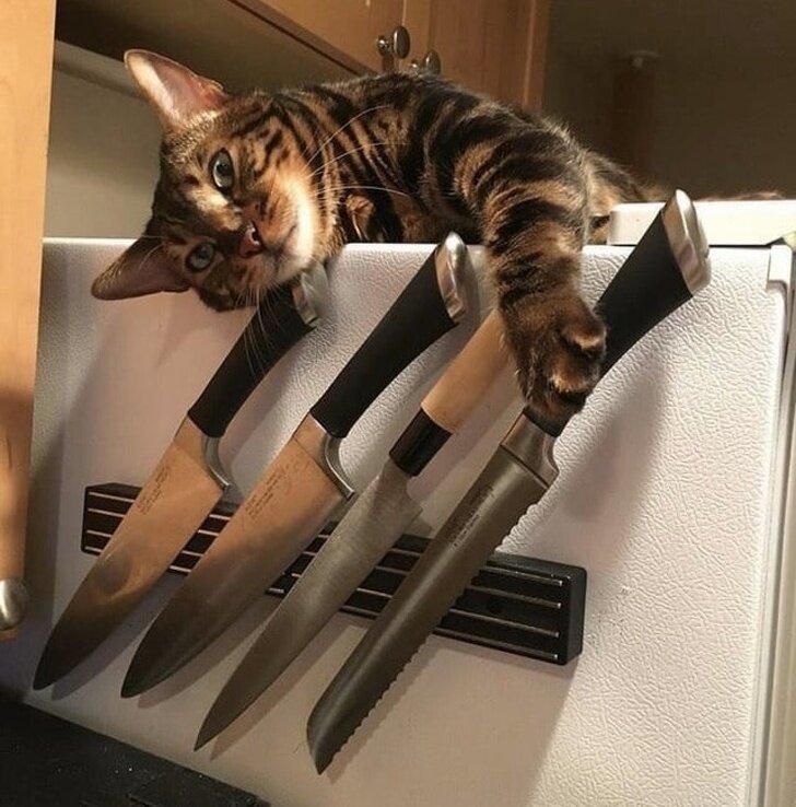 Кошки знают, как заставить нас вовремя кормить их. И поверьте, лучше не филонить