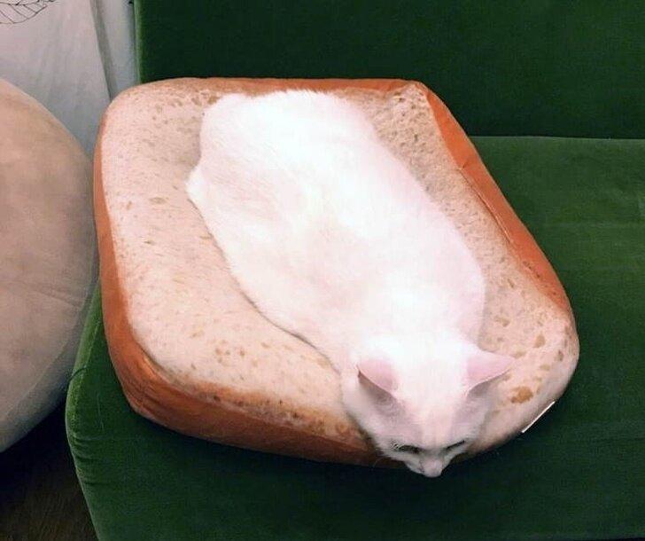 Как терминатор Т-1 000, кошки принимают форму той поверхности, с которой соприкасаются