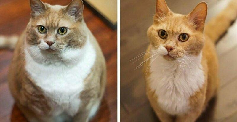 Как похудеть коту видео