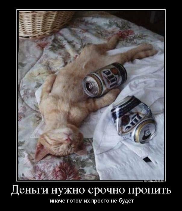 Демотиваторы коты в субботу