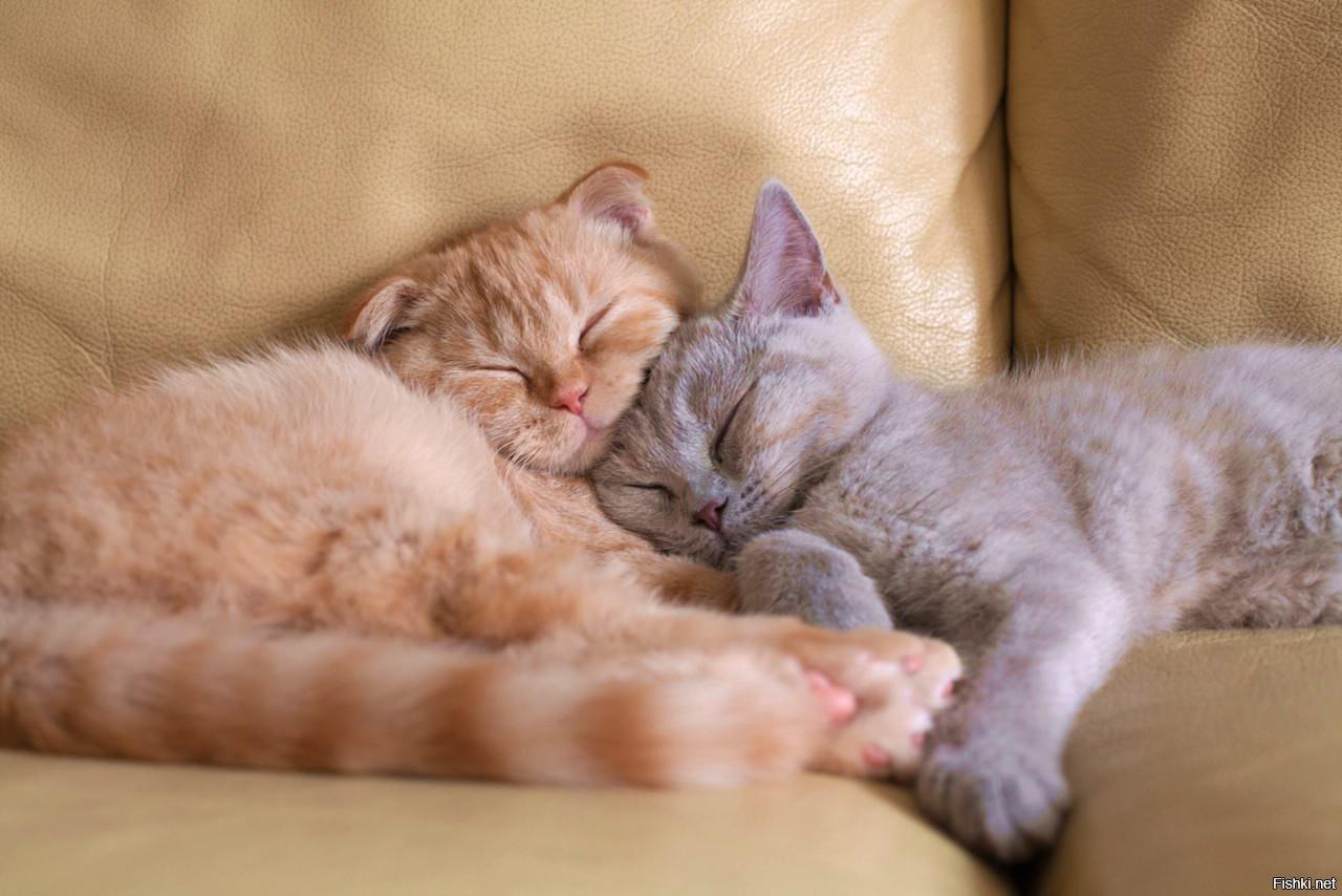 Картинки спят два кота