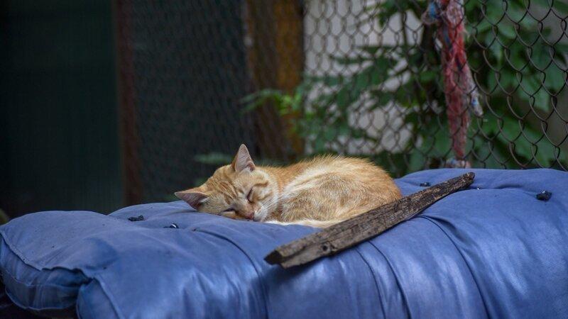 Как приятно поспать на мягеньком!