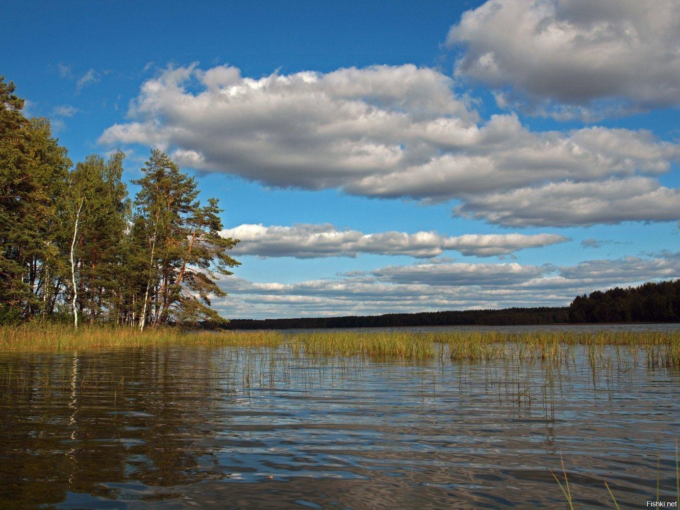 Вязники рыбалка озеро лучше где места