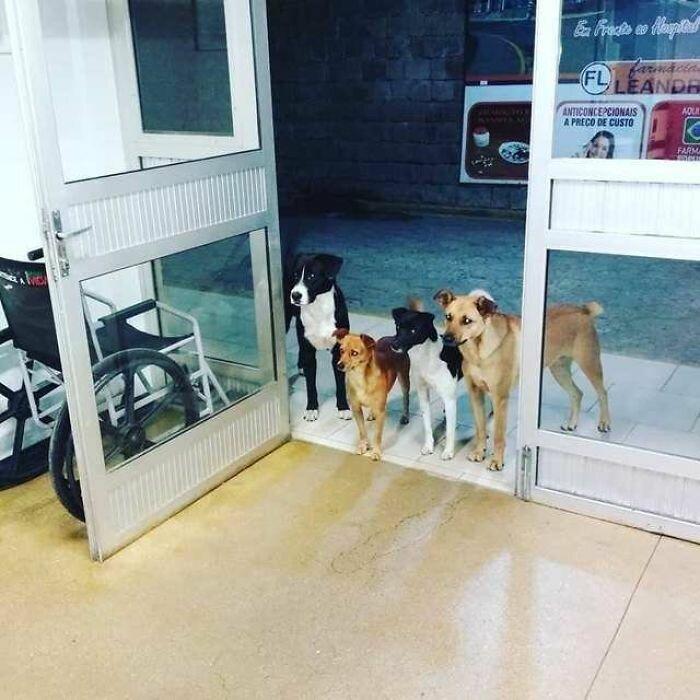 В Бразилии бездомного мужчину положили в больницу. Четыре дворняги, за которыми он присматривал, ждали его у входа